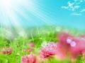 imagine de dragoste cu flori