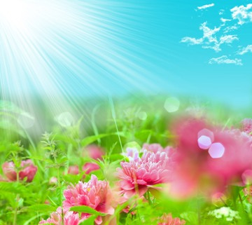 imagine-de-dragoste-cu-flori