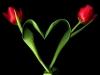 lalele-inima