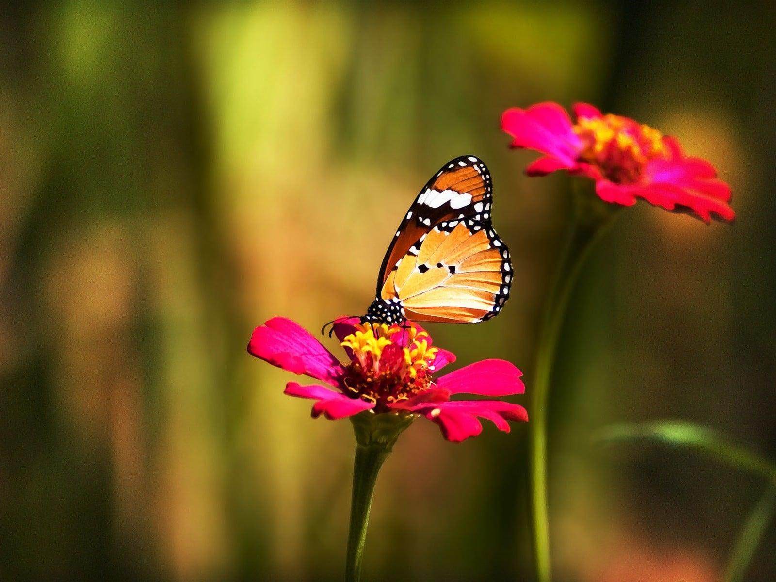 o imagine superba cu fluturi