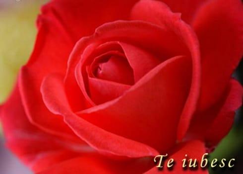te_iubesc1