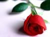 imagine_cu_trandafir_iubire