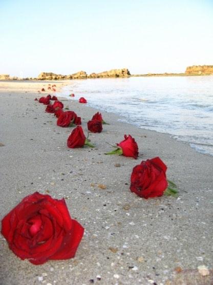poza cu trandafiri pe malul marii