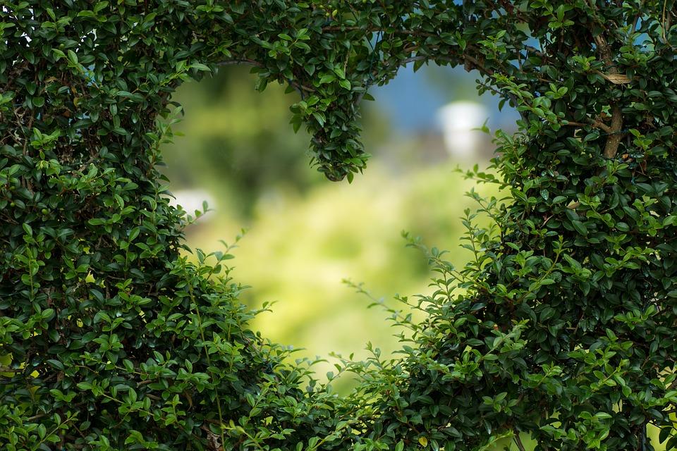 Inima din frunze