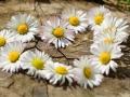 O inima din flori