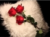 228015-1024x768-love-tenderness